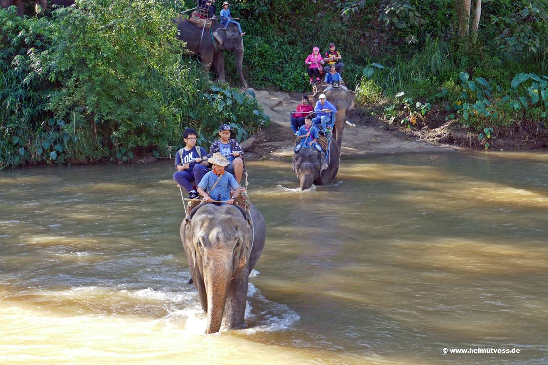 Thailand, Chiang Mai, Elephant Park & Elephant Clinic in Mae Taeng