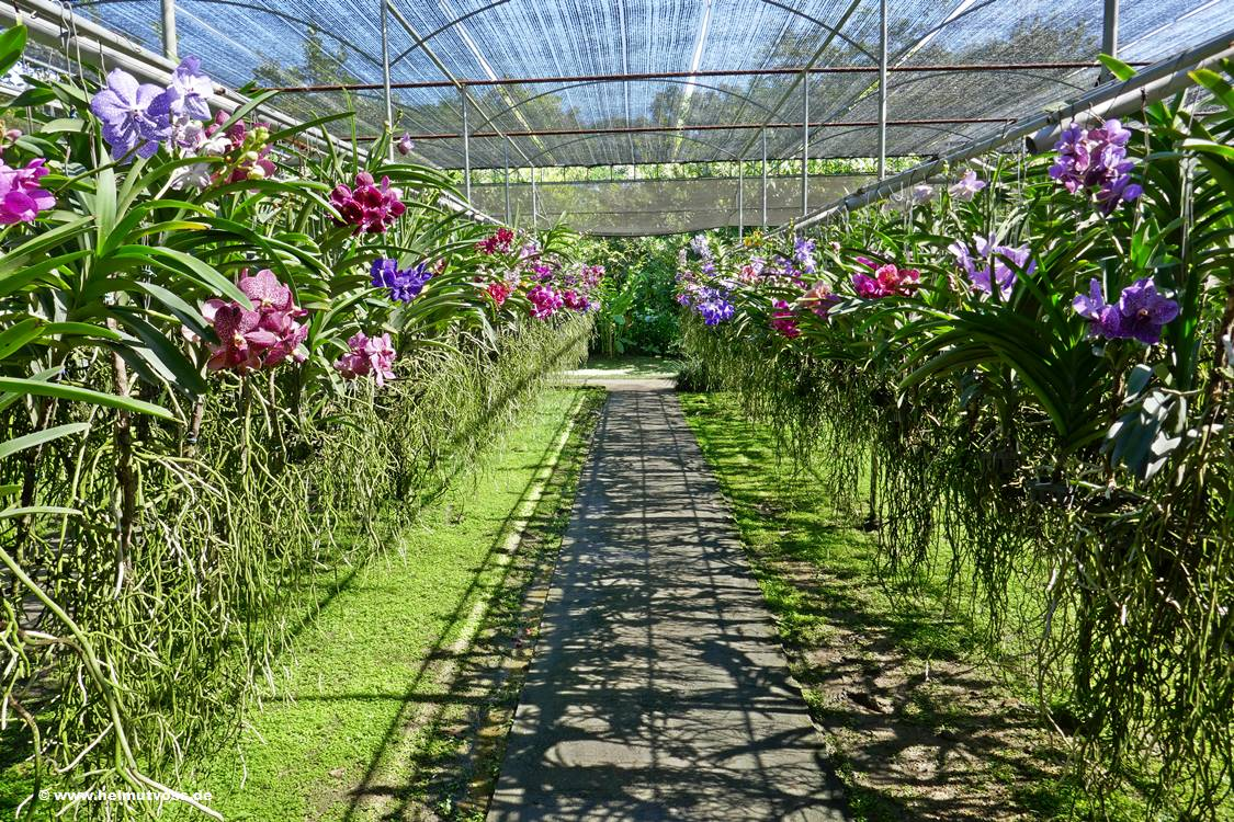 Thailand, Chiang Mai Bai Orchid and Butterfly Farm